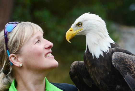Anne Sison and Eddie the eagle at Fairwinds Golf Club on Friday. Photograph By Aaron Hinks/Daily News - See more at: http://www.nanaimodailynews.com/news/eagle-aids-in-solving-goose-problem-1.1335472
